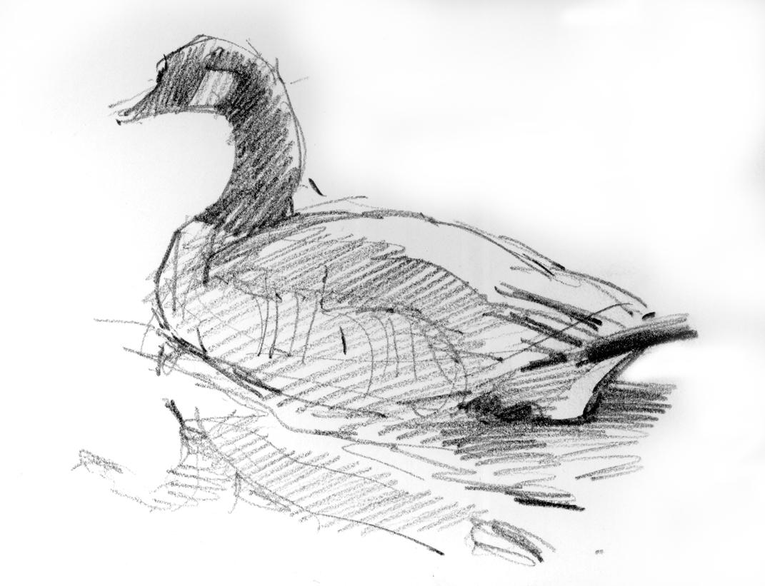 North american bird sketches