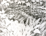 "Fern Glen, Harvard Forest. Graphite on rice paper, 26"" x 20"""