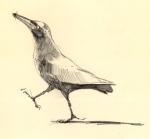 GrackleStrut