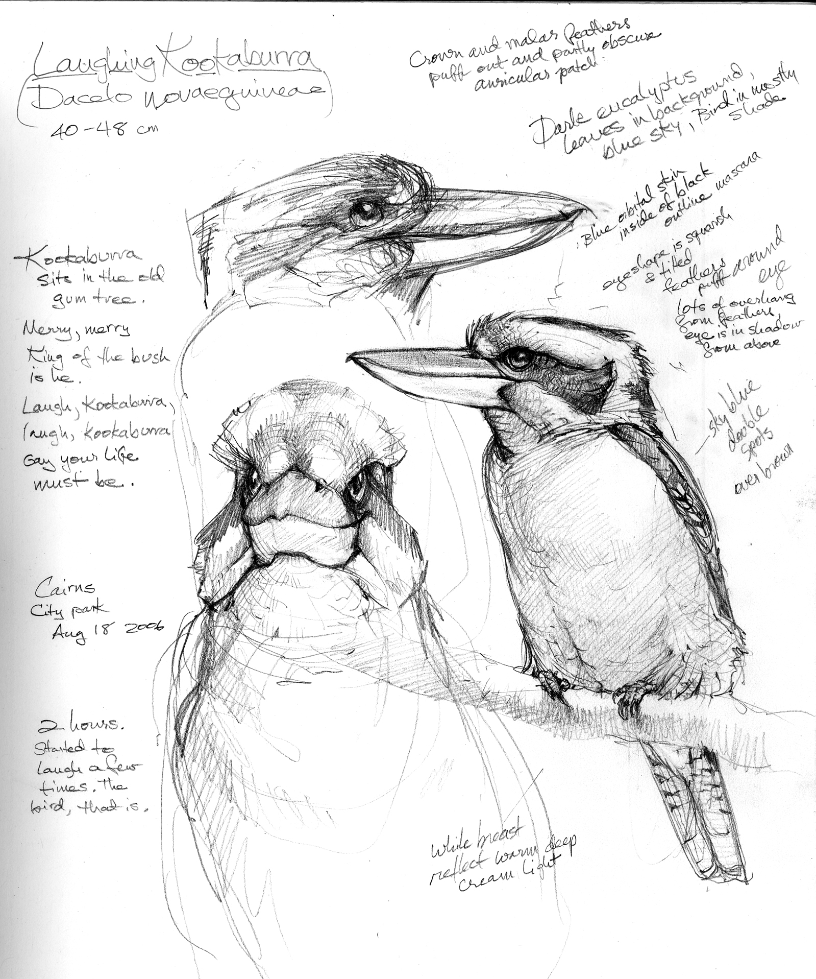 Australia Sketchbook
