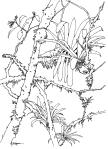 La Selva, Costa Rica, bromelliads