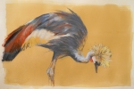 "Long Way Down, African crowned crane. Charcoal and pastel on paper, 22"" x 15"""