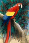 "Scarlet Macaw, oil on paper, 15"" x 22"""