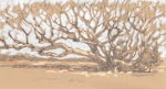 "Windblown oak on Martha's Vineyard. Graphite and pastel on paper, 7"" x 11"""