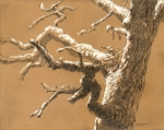 Post oak with snow dusting, Oklahoma. Graphite and pastel on paper.