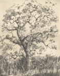 Post Oak 2, pencil