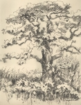 Post Oak 3, pencil