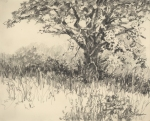 Post Oak 4, pencil