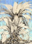 Understory palm collects leaf litter, Panama; graphite and pastel on paper