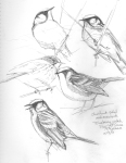 chestnut-sided warblers and an ovenbird