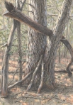 Chestnut-Hemlock Embrace