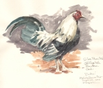 OldEnglishBantam