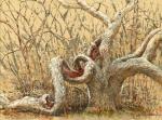 Quansoo Contorted Oak, Martha's Vineyard