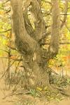 Wolf Pine fall