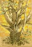 Wolf Pine, Petersham, fall