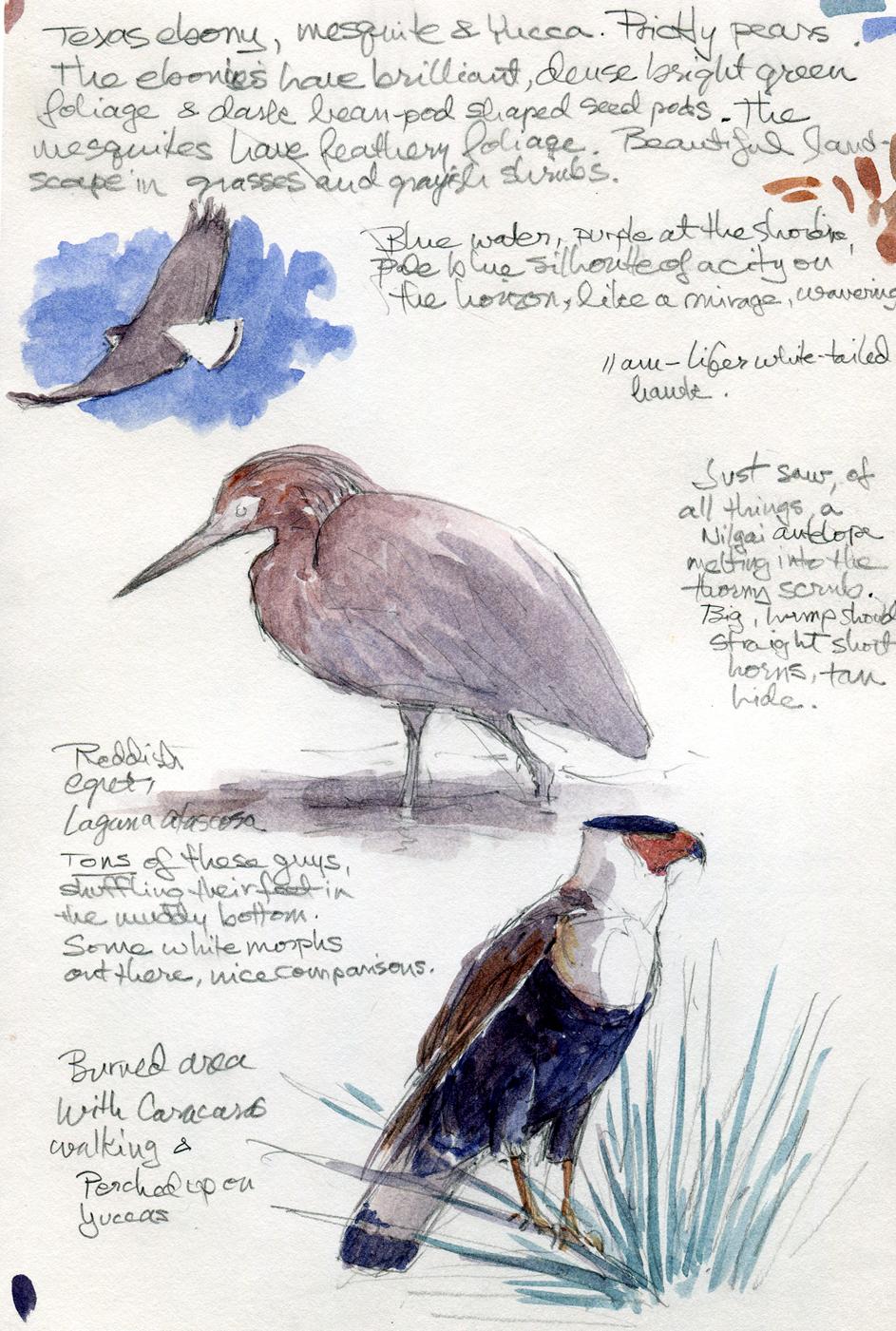 Binoculars Bugspray Sketchbook Drawing The Motmot