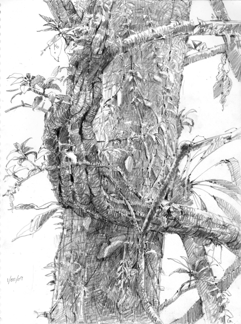 "From the Amazon rainforest, a life drawing of a liana. There's some kind of big moth clinging upside down to the trunk of the tree behind it. There's kind of a funny story that goes with this drawing. Video here. 6B pencil in 8 1/2"" x 11"" sketchbook."