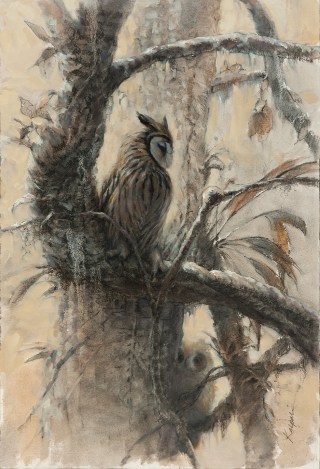 "Striped owl adult and juvenile, combined from sketches. Oil on paper, 15"" x 22""."