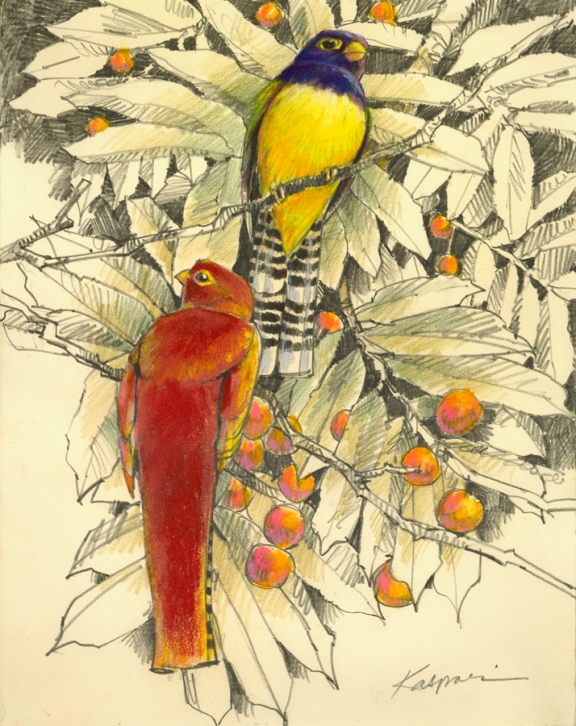 These are not quetzals. Close, but no cigar. (Graphite and pastel on Rives BFK paper, )
