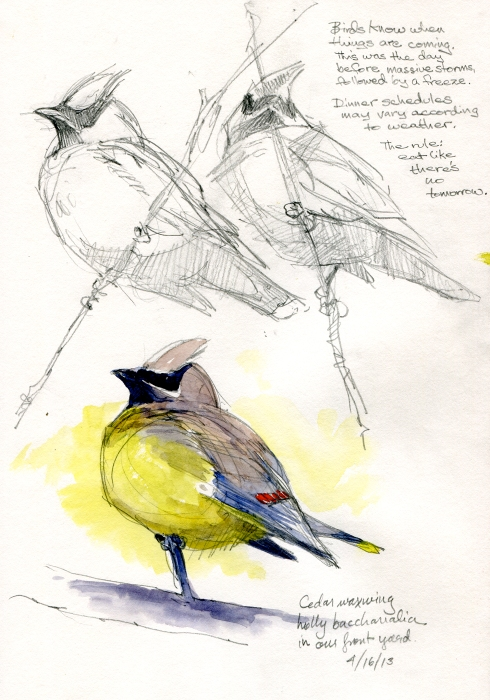 CWaxwings2
