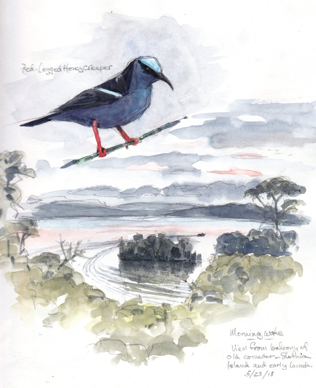 "Red legged honeycreeper and this morning's dawn pink over the Panama Canal. The little chunk of trees in the water is called Slothia Island, and is peopled only with greater anis, crocodiles and anything else that can swim, fly or boat over there from BCI. That's probably a research biologist making that wake in the water. Watercolor over pencil on Stillman & Birn Alpha Series Hardbound 8 1/2 x 11""."