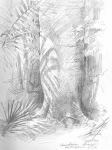 Cuipo Tree