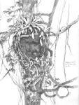 Slaty tailed Trogon nest