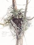 Trogon Nest