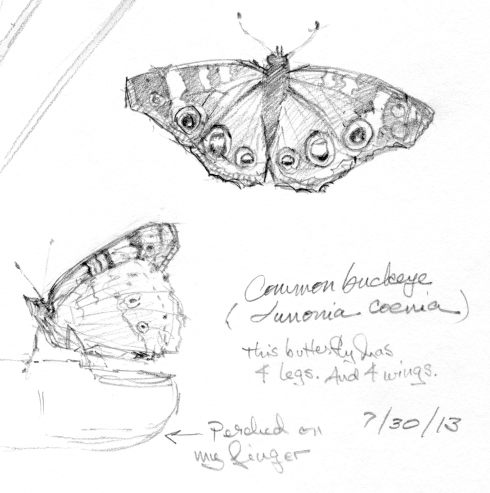 Common buckeye, a gorgeous butterfly with four legs, count 'em. And read on. Pencil on paper.
