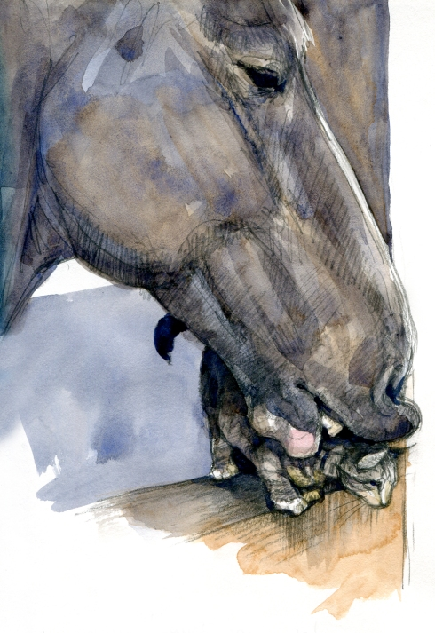 Clydesdale consorts with kitten, impossibly cute scene in a barn in Yukon, Oklahoma. An enormous horse named Prince affectionately gnawed the nape of an unnamed barn cat, which purred as the piano-key teeth surrounded its head and chewed lightly. Watercolor over pencil.