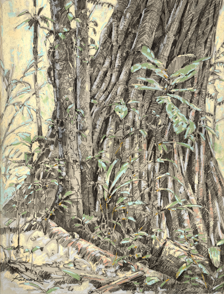 The original drawing was done plein air in the Amazon forest, showing a strangler fig that's consumed another tree (they're vines that choke trees to death as they use them to get themselves up into the canopy. They become trees themselves, with rotting trees at their cores).