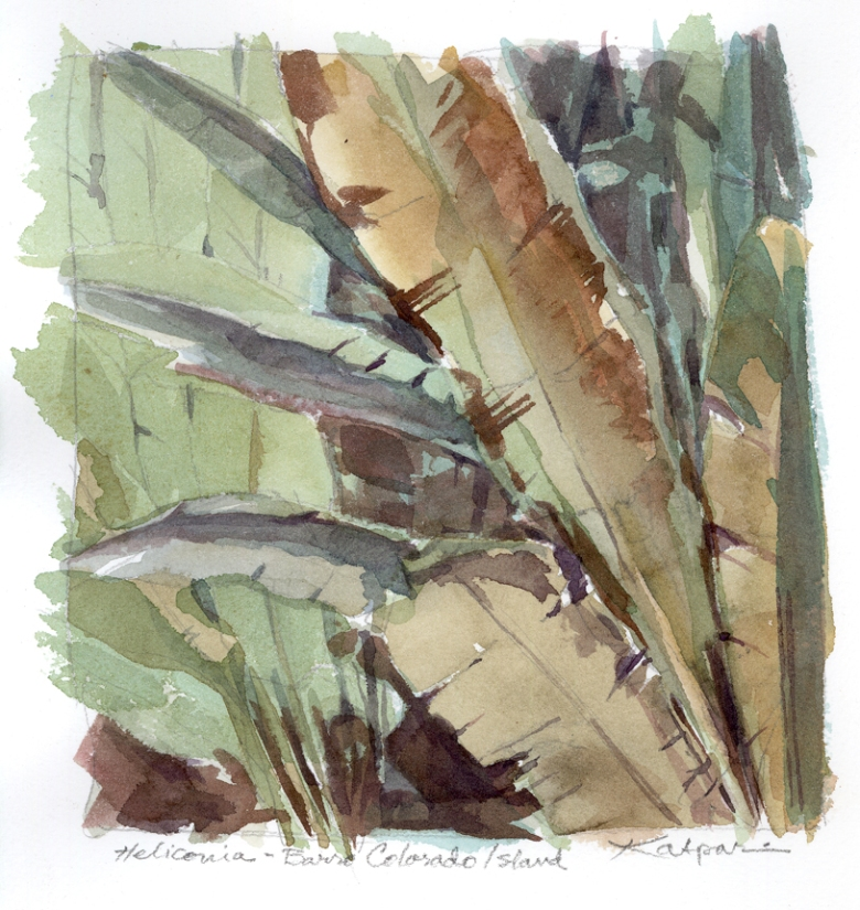 "This tiny watercolor serves as the foliage for ""Shadowplay"". It was painted from life on Barro Colorado Island, Panama. The original measures about 6"" x 6""."