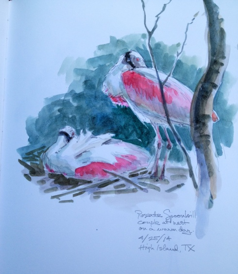 At High Island, Texas, famous for warbler migration binges- no one ever mentions the spoonbill rookery. Or do they? Watercolor over pencil on Stillman& Birn Alpha Series 8.5x 11 sketchbook.