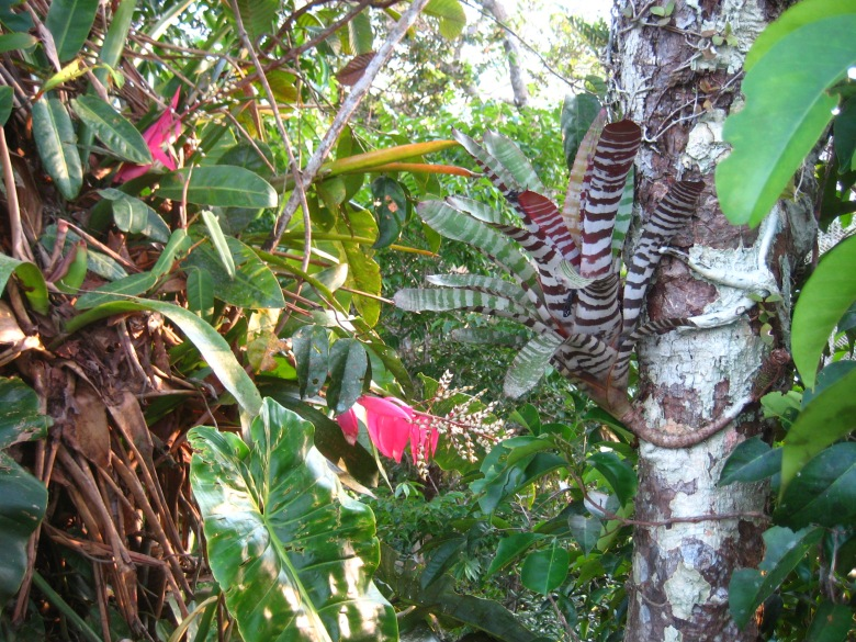 Lots of colorful, highly patterned vegetation to go along with the jewel-like birds.