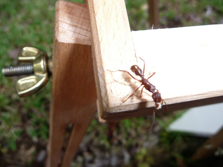 A large ant taking an easel walk.