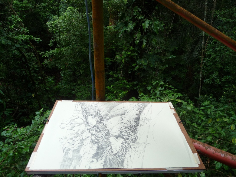 This is where it started: in the scaffold canopy tower on Barro Colorado Island. I bungee-corded the drawing board and myself to the pipes and tried not to look down. This is at about 75 feet up or so.