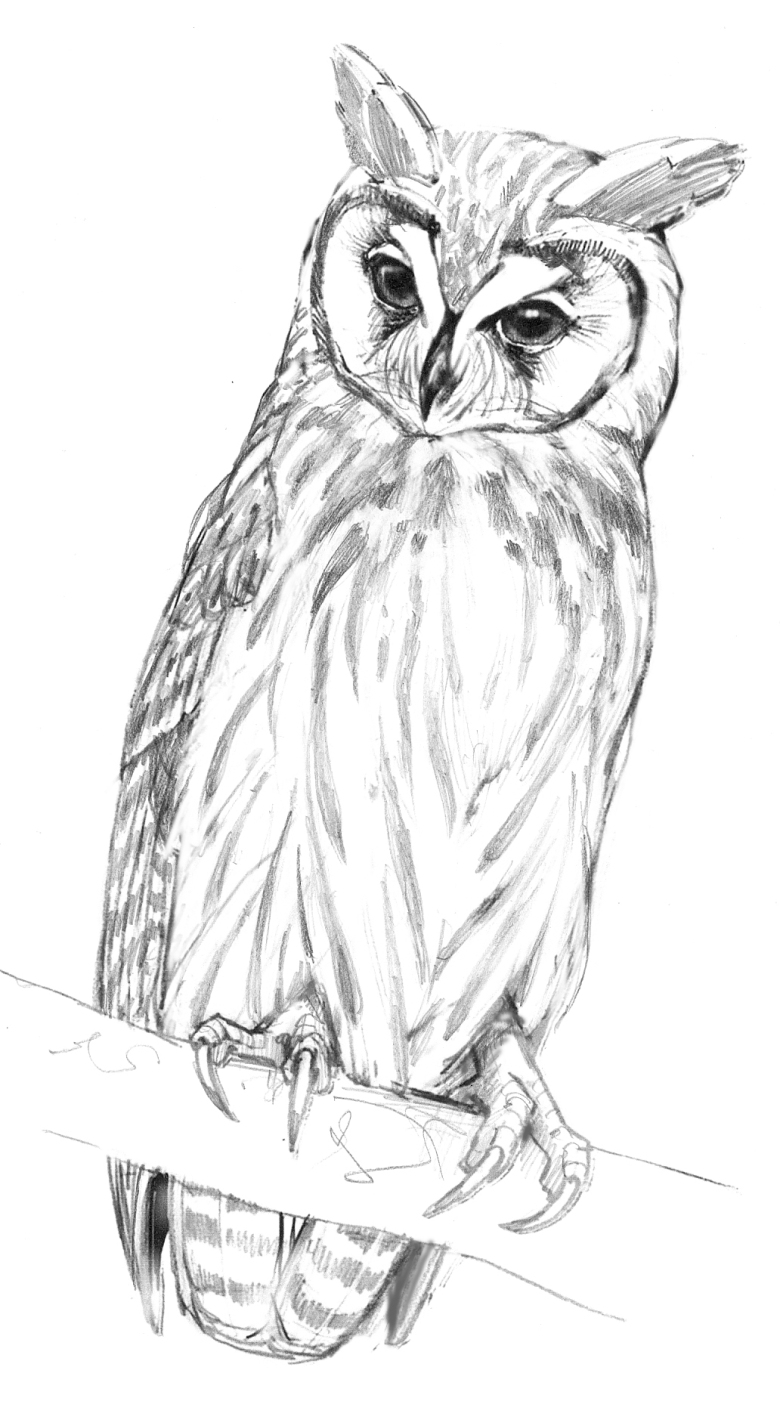 "This sketch is from the owl page in The Field Guide to Birds of Trinidad and Tobago, which I painted. For ""Moonchild"" I turned her head to face her offspring."