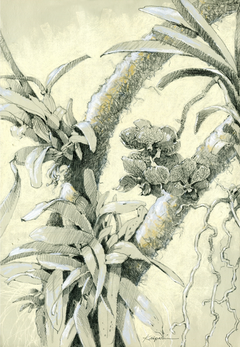 This is the original sketch of the vanda orchid used in this painting. It's growing in the Crystal Bridge Conservatory right now. Can you find it?