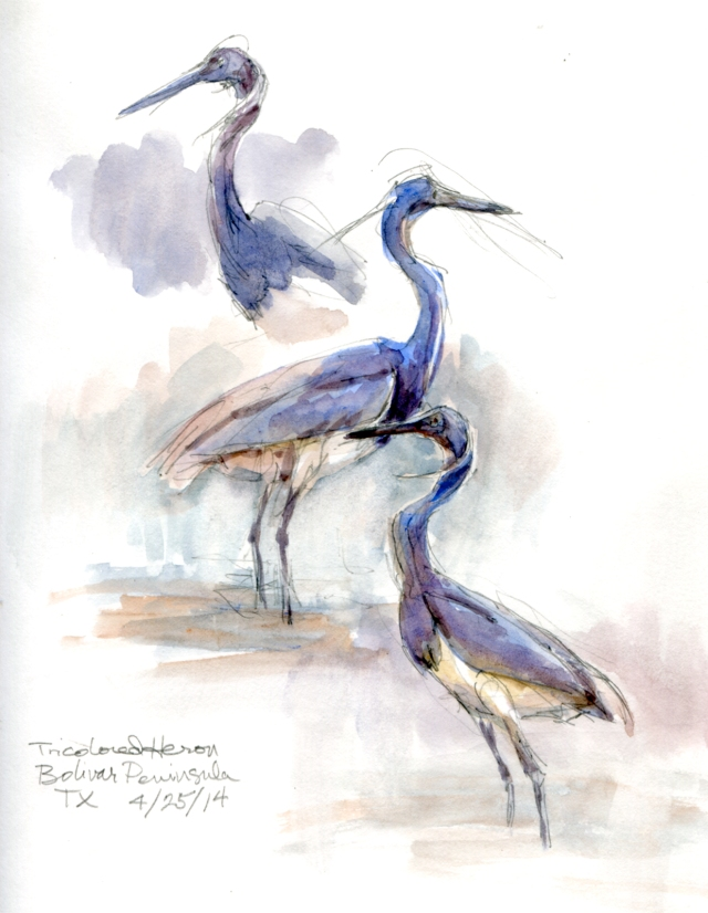 "Tricolored heron studies, watercolor over pencil, Stillman & Birn Alpha Series 8 1/2"" x 11"". Fishing for teeny minnows in a Bolivar Peninsula inlet on an incoming tide."