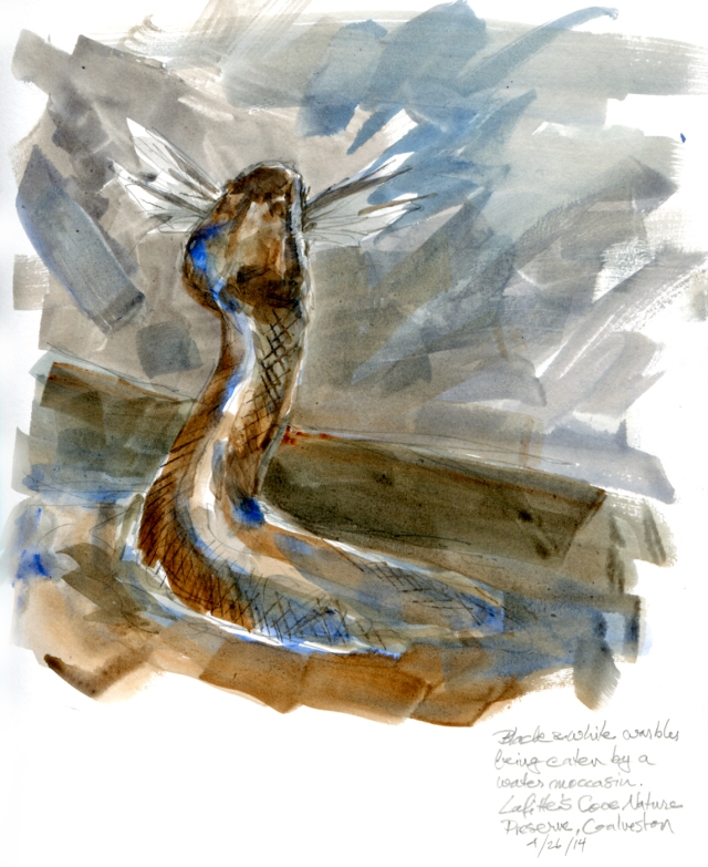 "In the water feature, a snake makes a kill. Watercolor over pencil, Stillman & Birn Alpha Series, 8 1/2"" x 11"""