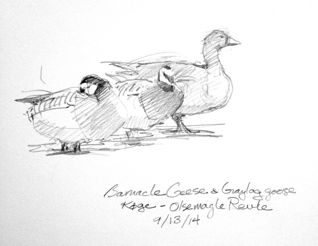 """Barnacle geese at the marsh. Their white faces in black necks makes them look like sock monkeys. Beautiful geese. Not the most common in the marsh, but the most vivid. The greylag next to them- that's the most common. Pencil in Robert Bateman 8 1/2"""" x 11 sketchbook."""