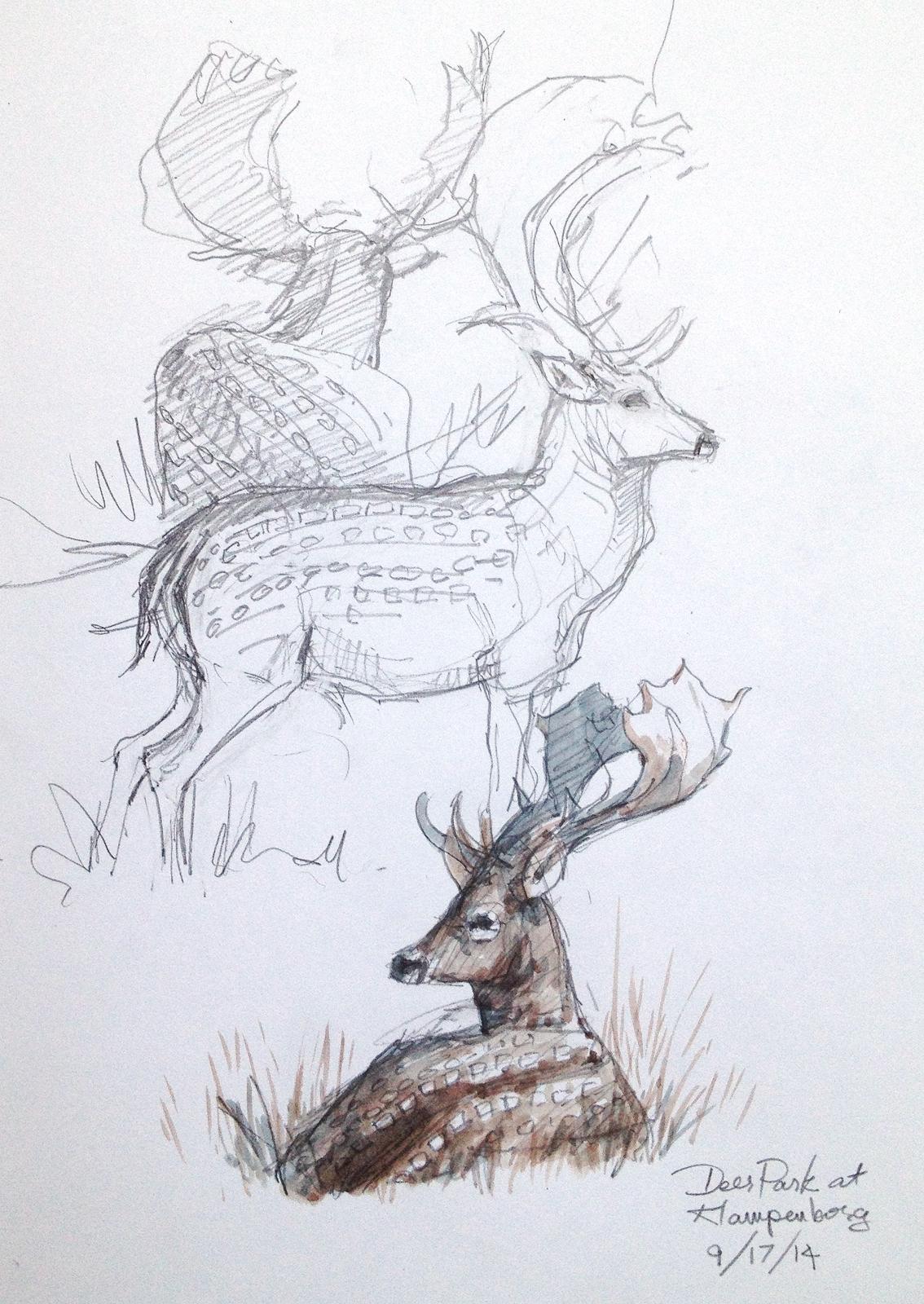 denmark sketchbook 2014  u2013 drawing the motmot