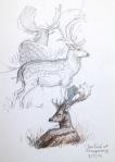 Fallow Deer at Jaegersborg Deer Park