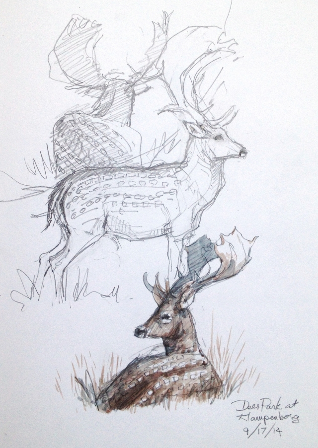 Today is a two-fer. More charismatic fallow deer. These were resting in the shade of giant beech trees, looking peaceful until two males got up to clack antlers and grunt. Pencil and watercolor on Stillman & Birn 8 1/2 x 11 Alpha Series sketchbook.