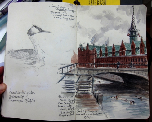 A great crested grebe, sketched on Sortedam So, one of the concrete lakes at the edge of Copenhagen's City Center. The facing page is a sketch of the canal around Christianborg Castle, where a swimming race was underway. The copper-roofed building behind the bridge is the Old Stock Exchange, built in  1619. Watercolor over pencil, 5 x 8 Moleskine.