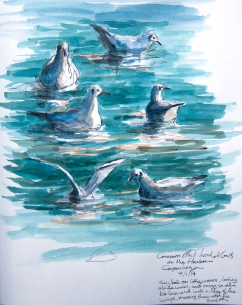 "Common black-headed gulls, Copenhagen harbor, watercolor over pencil, Stillman & Birn sketchbook, 8 1/2"" x 11""."