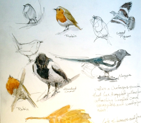 "A snippet of a sketchbook page; avian activity at the Botanical Garden, a.k.a. Botanisk Have. ""Have"", pronounced, ""ha-va"", is the Danish word for garden, and might be the root of the English word, ""haven"", which it certainly is. Pencil with spots of watercolor on Stillman & Birn Alpha Series."