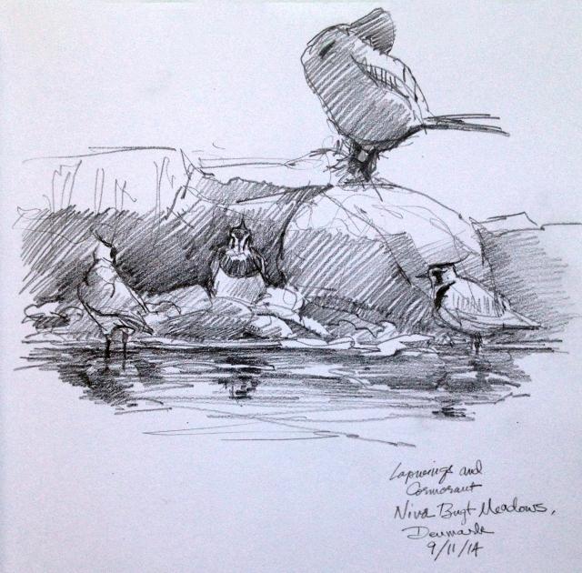 Cormorant, Lapwings, Nivå Marsh. Pencil on Stillman & Birn Alpha Series.