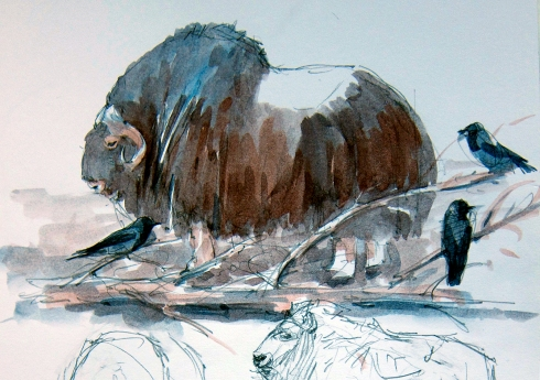 "Muskox and hooded crows at Copenhagen Zoo. Watercolor over pencil, Robert Bateman 8 1/2"" x 11 sketchbook."