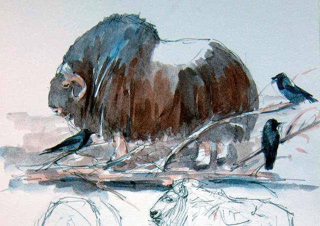 """Muskox and hooded crows at Copenhagen Zoo. Watercolor over pencil, Robert Bateman 8 1/2"""" x 11 sketchbook."""